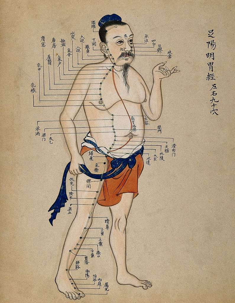 d4d4ccf08d_50153354_acupuncture-chart-with-a-series-of-points-indicated-on-the-wellcome-v0018499